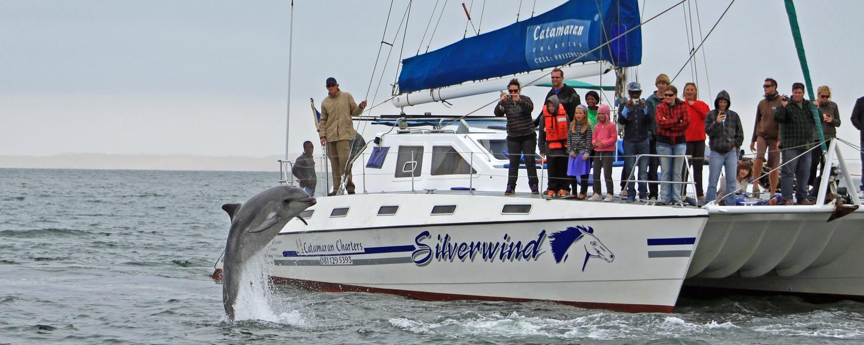 Catamaran Charters Marine Big 5 Sightings In Walvis Bay Namibia